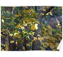 Autumn, Cataract Gorge - Launceston, Tasmania Poster