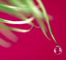 Purple Drop by Tony Eccles