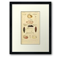 The Animal Kingdom by Georges Cuvier, PA Latreille, and Henry McMurtrie 1834  278 - Mollusca Mollusks Framed Print