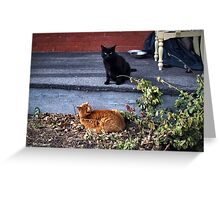 Two Cats in the Yard Greeting Card