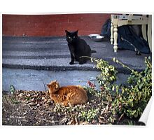 Two Cats in the Yard Poster