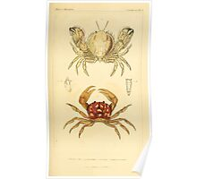 The Animal Kingdom by Georges Cuvier, PA Latreille, and Henry McMurtrie 1834  305 - Crustacea Crustaeans Poster