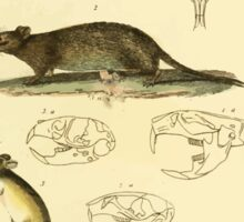 The Animal Kingdom by Georges Cuvier, PA Latreille, and Henry McMurtrie 1834 606 - Mammalia Mammals Sticker