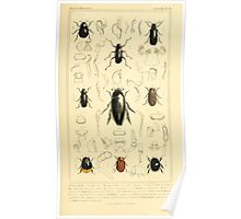 The Animal Kingdom by Georges Cuvier, PA Latreille, and Henry McMurtrie 1834  441 - Insecta Insects Poster