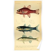 The Animal Kingdom by Georges Cuvier, PA Latreille, and Henry McMurtrie 1834  062 - Pisces Fish Poster