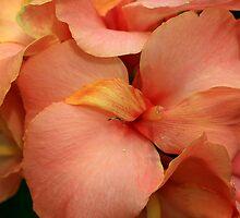 Lovely In Peach by Deborah  Benoit