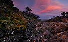 Mt. FieldScape by Robert Mullner