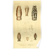 The Animal Kingdom by Georges Cuvier, PA Latreille, and Henry McMurtrie 1834  350 - Crustacea Crustaeans Poster
