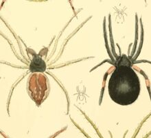 The Animal Kingdom by Georges Cuvier, PA Latreille, and Henry McMurtrie 1834  371 - Arachnides Arachnids Sticker