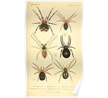 The Animal Kingdom by Georges Cuvier, PA Latreille, and Henry McMurtrie 1834  371 - Arachnides Arachnids Poster