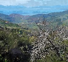 Laureana Cilento: landscape flowering trees and sea by Giuseppe Cocco