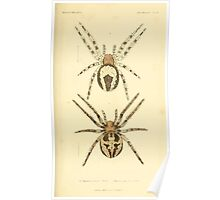The Animal Kingdom by Georges Cuvier, PA Latreille, and Henry McMurtrie 1834  383 - Arachnides Arachnids Poster