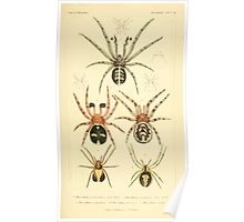 The Animal Kingdom by Georges Cuvier, PA Latreille, and Henry McMurtrie 1834  369 - Arachnides Arachnids Poster