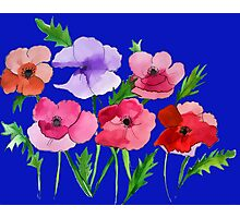 Poppies Amapolas Hand-painted Photographic Print