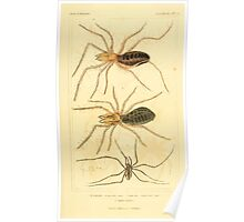 The Animal Kingdom by Georges Cuvier, PA Latreille, and Henry McMurtrie 1834  401 - Arachnides Arachnids Poster