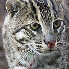 Fishing Cat by Steve Bullock