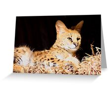 The stunning serval ......... Greeting Card