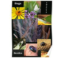 Bugs, Beetles, Insects Poster