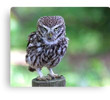 Who are you calling Shortie??? Canvas Print