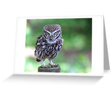 Who are you calling Shortie??? Greeting Card