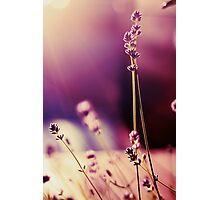 Purple Shine Photographic Print