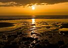 Golden Morning by Svetlana Sewell