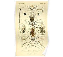 The Animal Kingdom by Georges Cuvier, PA Latreille, and Henry McMurtrie 1834  403 - Arachnides Arachnids Poster