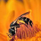 Saturated In Pollen  by Dennis Stewart