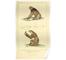 The Animal Kingdom by Georges Cuvier, PA Latreille, and Henry McMurtrie 1834 613 - Mammalia Mammals Poster