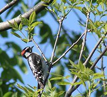 woodpecker by Dave & Trena Puckett