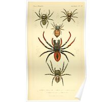 The Animal Kingdom by Georges Cuvier, PA Latreille, and Henry McMurtrie 1834  397 - Arachnides Arachnids Poster
