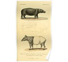 The Animal Kingdom by Georges Cuvier, PA Latreille, and Henry McMurtrie 1834 624 - Mammalia Mammals Poster