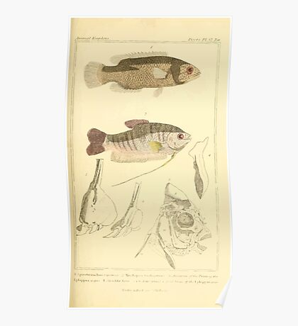 The Animal Kingdom by Georges Cuvier, PA Latreille, and Henry McMurtrie 1834  122 - Pisces Fish Poster