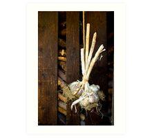 Garlic on a string Art Print