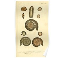 The Animal Kingdom by Georges Cuvier, PA Latreille, and Henry McMurtrie 1834  218 - Mollusca Mollusks Poster