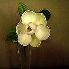 Beauty in a Magnolia Bloom by DottieDees