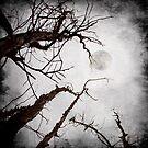claro de luna by Luis Beltrán