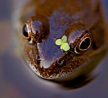 Frogs can look cute! by Carole Stevens