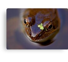 Frogs can look cute! Canvas Print