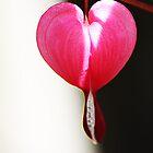love drops by wendywoo1972