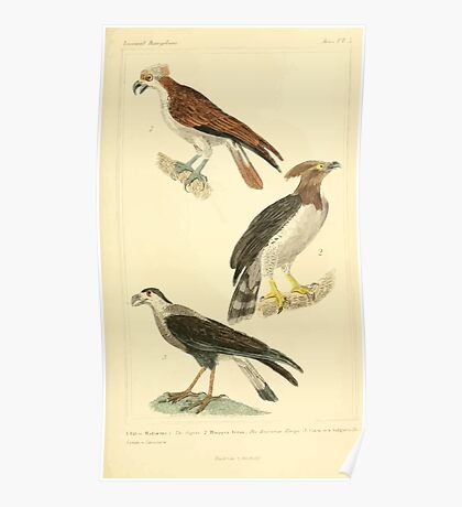 The Animal Kingdom by Georges Cuvier, PA Latreille, and Henry McMurtrie 1834 648 - Aves Avians Birds Poster