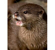 Short clawed otter! Photographic Print