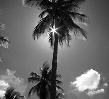 palm tree by openyoureyes
