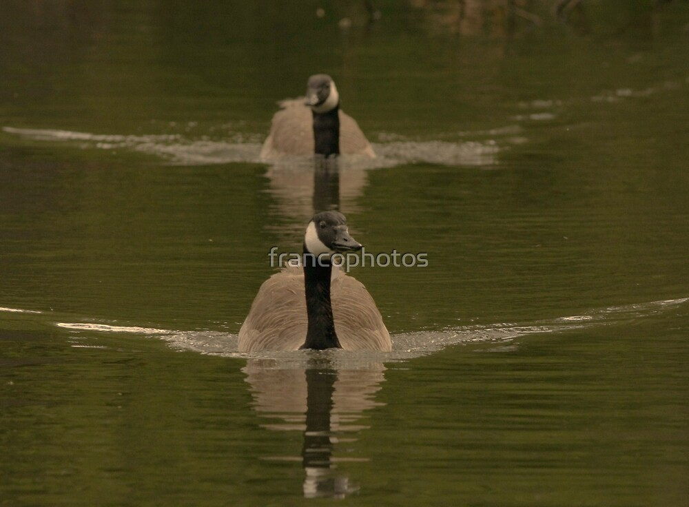 Ever Get The Feeling Your Being Followed! by Franco De Luca Calce