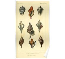 The Animal Kingdom by Georges Cuvier, PA Latreille, and Henry McMurtrie 1834  250 - Mollusca Mollusks Poster