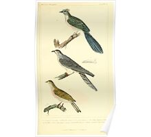 The Animal Kingdom by Georges Cuvier, PA Latreille, and Henry McMurtrie 1834 655 - Aves Avians Birds Poster
