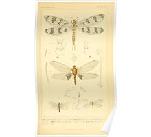 The Animal Kingdom by Georges Cuvier, PA Latreille, and Henry McMurtrie 1834  488 - Insecta Insects Poster