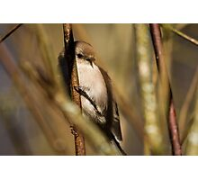 A Litte Bird Amidst the Branches Photographic Print