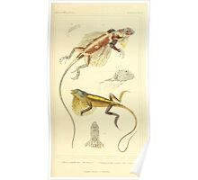 The Animal Kingdom by Georges Cuvier, PA Latreille, and Henry McMurtrie 1834  022 - Reptilia Reptiles Poster