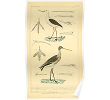 The Animal Kingdom by Georges Cuvier, PA Latreille, and Henry McMurtrie 1834 734 - Aves Avians Birds Poster